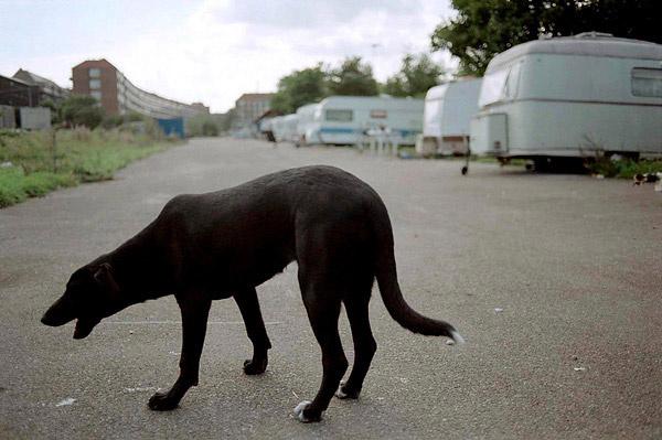 Homeless - Copenhagen - Dog.